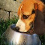 Consigli alimentazione per una dieta corretta del vostro cane