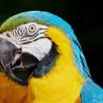 Passione animali esotici: perchè è importante avere un negozio di riferimento
