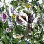 Piantemagiche.it: il portale delle erbe e delle piante medicinali